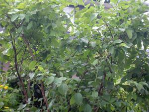 20120717-pict1935.jpg